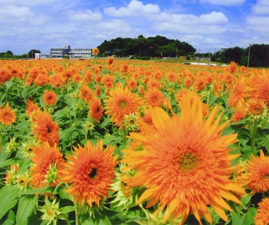 筑西市教育長賞「ひまわり娘の夏」