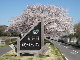 S桜堤04