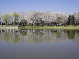 S県西公園01