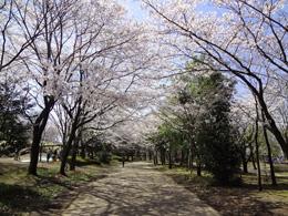 S県西公園02