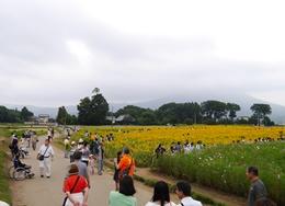 開花状況9.6�@