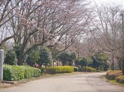 県西総合公園1