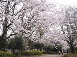 県西総合公園4.10