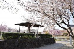 下岡崎公園4.14-2