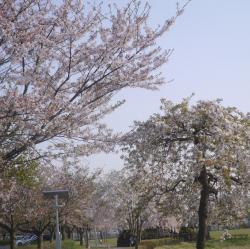 近隣公園2