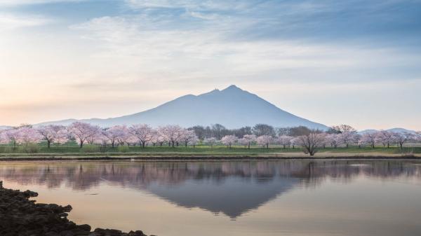 筑波山と桜2