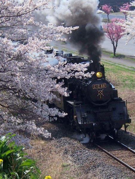 H30年度フォトコンテスト受賞作品 筑西市長賞「春の旅立ち」