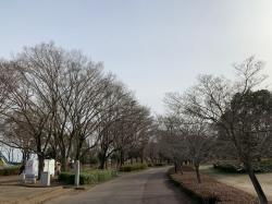 県西総合公園2019.3.25�@
