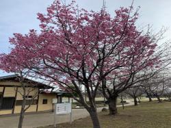 下岡崎近隣公園2019.3.25�A