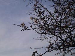 桜づつみ2019.3.28