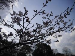 県西総合公園2019.3.28