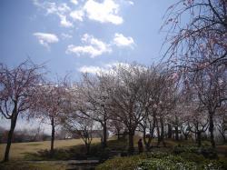 下岡崎近隣公園2019.4.3