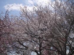 下岡崎近隣公園2019.4.3�A