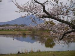 母子島遊水地2019.4.12�A