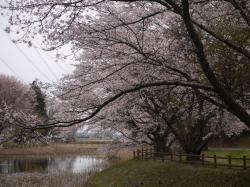 うわばみ池2019.4.12�A
