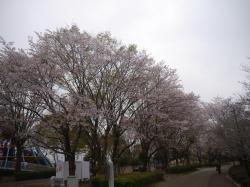 県西総合公園2019.4.12�@