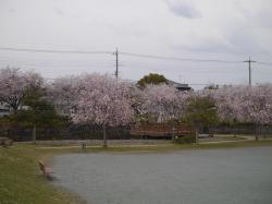 下岡崎近隣公園2019.4.12�@