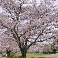 宮山公園2019.4.12�A