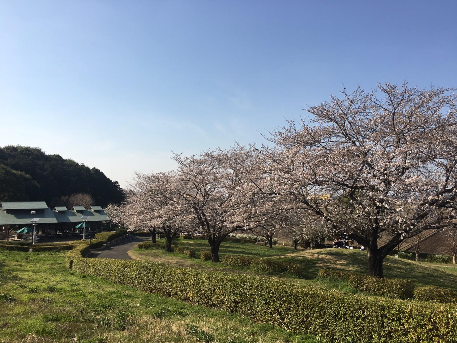 0324miyayama-2
